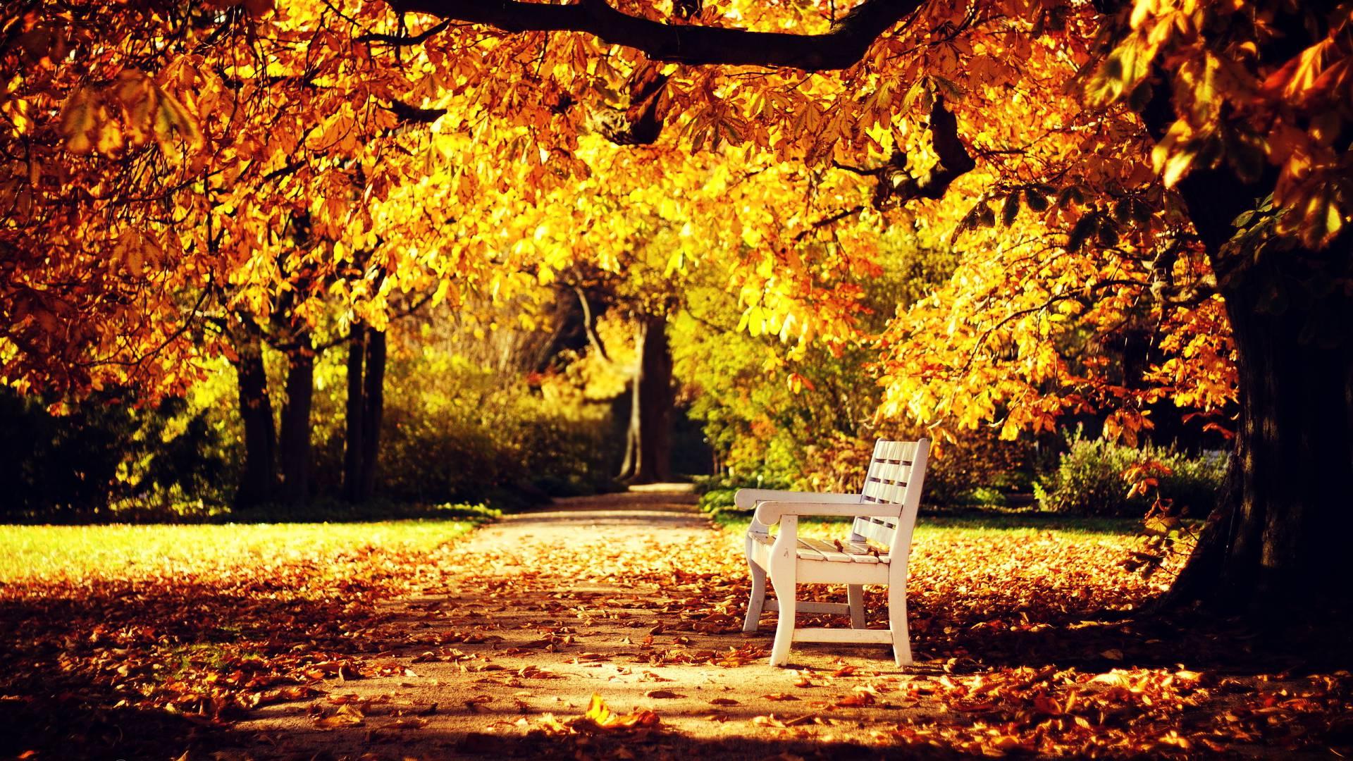 Hình ảnh thiên nhiên mùa thu đẹp mê hồn