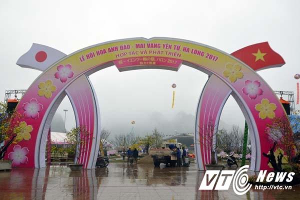 Lễ hội Hoa anh đào – Mai vàng Yên Tử, Hạ Long 2017 diễn ra từ ngày 11/3
